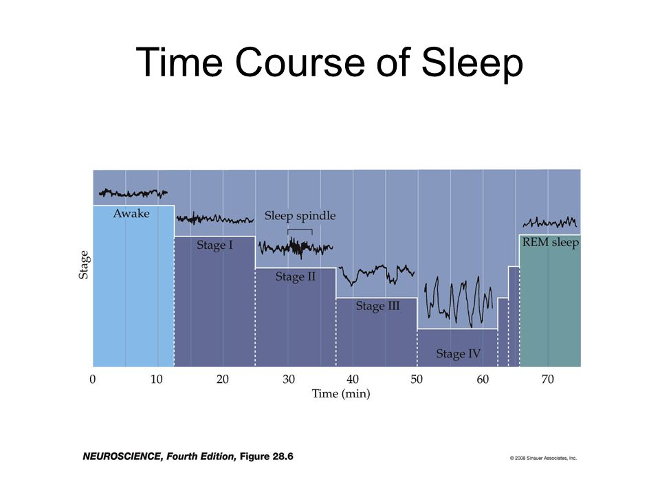 Time Course of Sleep