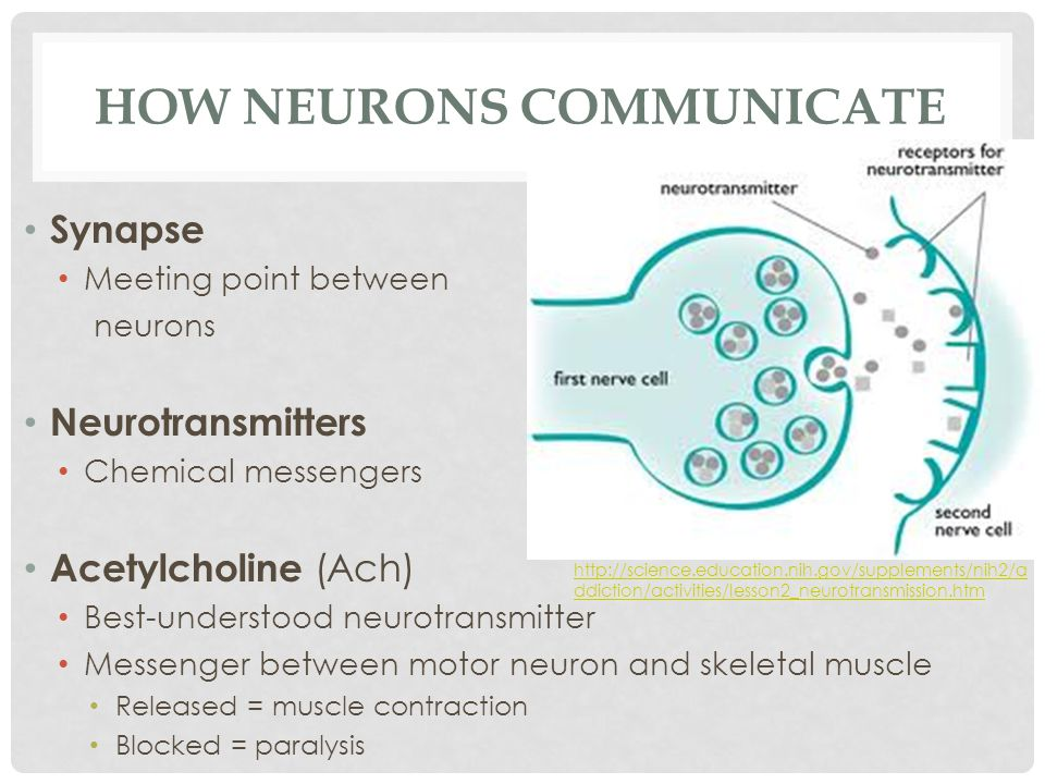 HOW NEURONS COMMUNICATE Synapse Meeting point between neurons Neurotransmitters Chemical messengers Acetylcholine (Ach) Best-understood neurotransmitt