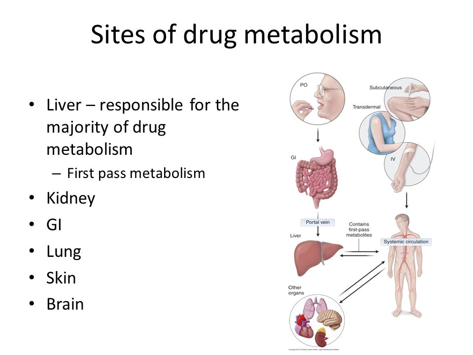 Sites of drug metabolism Liver – responsible for the majority of drug metabolism – First pass metabolism Kidney GI Lung Skin Brain