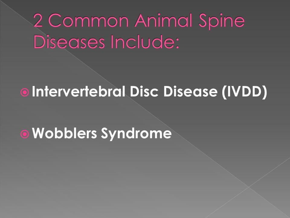  Intervertebral Disc Disease (IVDD)  Wobblers Syndrome