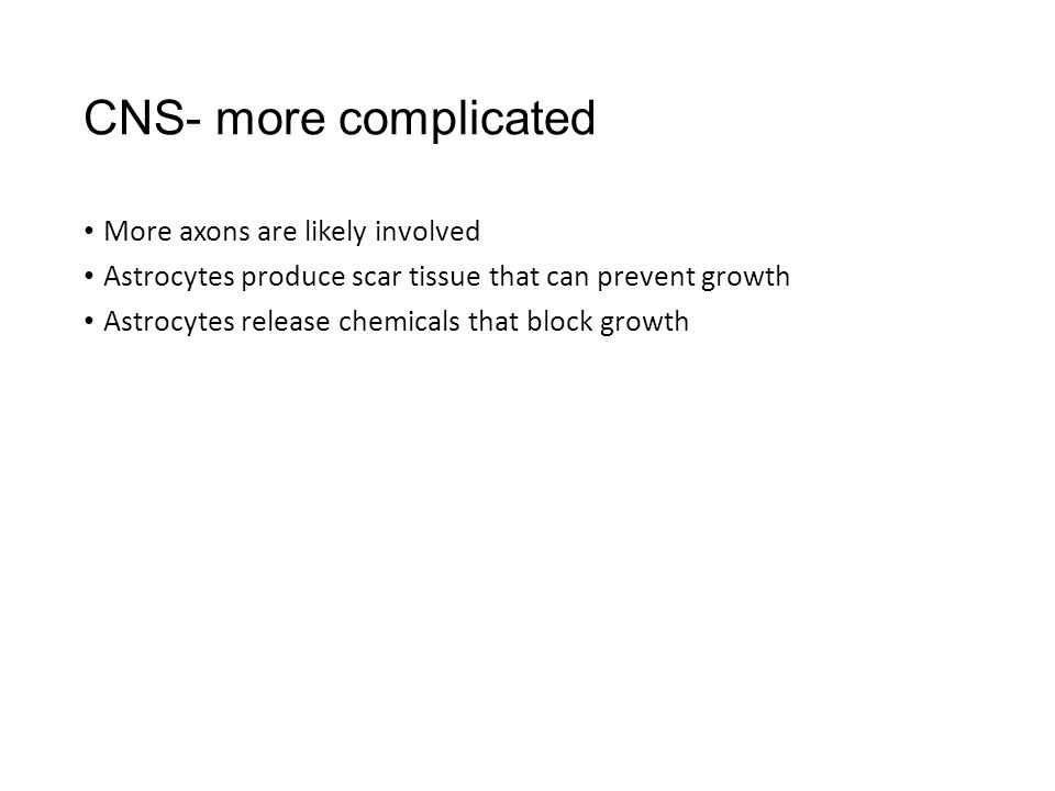 CNS- more complicated More axons are likely involved Astrocytes produce scar tissue that can prevent growth Astrocytes release chemicals that block growth