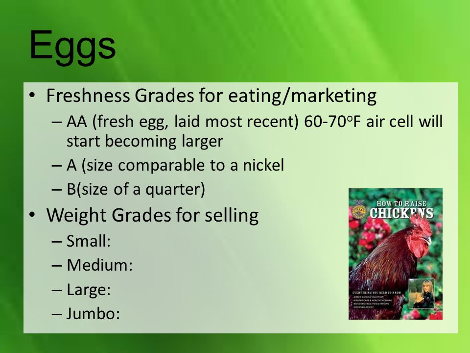 Eggs Freshness Grades for eating/marketing – AA (fresh egg, laid most recent) 60-70 o F air cell will start becoming larger – A (size comparable to a nickel – B(size of a quarter) Weight Grades for selling – Small: – Medium: – Large: – Jumbo: