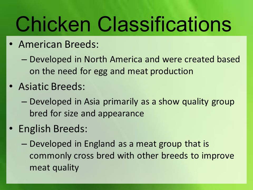 Chicken Classifications American Breeds: – Developed in North America and were created based on the need for egg and meat production Asiatic Breeds: – Developed in Asia primarily as a show quality group bred for size and appearance English Breeds: – Developed in England as a meat group that is commonly cross bred with other breeds to improve meat quality