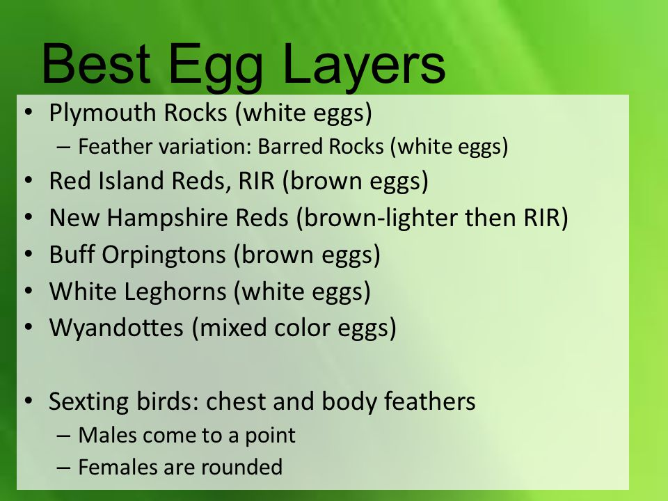 Best Egg Layers Plymouth Rocks (white eggs) – Feather variation: Barred Rocks (white eggs) Red Island Reds, RIR (brown eggs) New Hampshire Reds (brown-lighter then RIR) Buff Orpingtons (brown eggs) White Leghorns (white eggs) Wyandottes (mixed color eggs) Sexting birds: chest and body feathers – Males come to a point – Females are rounded