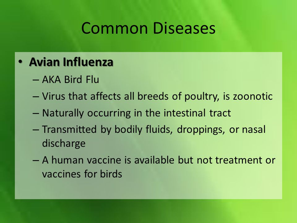 Common Diseases Avian Influenza Avian Influenza – AKA Bird Flu – Virus that affects all breeds of poultry, is zoonotic – Naturally occurring in the intestinal tract – Transmitted by bodily fluids, droppings, or nasal discharge – A human vaccine is available but not treatment or vaccines for birds