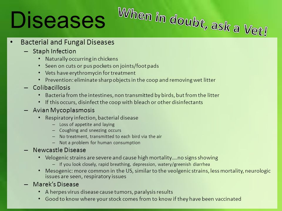 Diseases Bacterial and Fungal Diseases – Staph Infection Naturally occurring in chickens Seen on cuts or pus pockets on joints/foot pads Vets have erythromycin for treatment Prevention: eliminate sharp objects in the coop and removing wet litter – Colibacillosis Bacteria from the intestines, non transmitted by birds, but from the litter If this occurs, disinfect the coop with bleach or other disinfectants – Avian Mycoplasmosis Respiratory infection, bacterial disease – Loss of appetite and laying – Coughing and sneezing occurs – No treatment, transmitted to each bird via the air – Not a problem for human consumption – Newcastle Disease Velogenic strains are severe and cause high mortality….no signs showing – If you look closely, rapid breathing, depression, watery/greenish diarrhea Mesogenic: more common in the US, similar to the veolgenic strains, less mortality, neurologic issues are seen, respiratory issues – Marek's Disease A herpes virus disease cause tumors, paralysis results Good to know where your stock comes from to know if they have been vaccinated