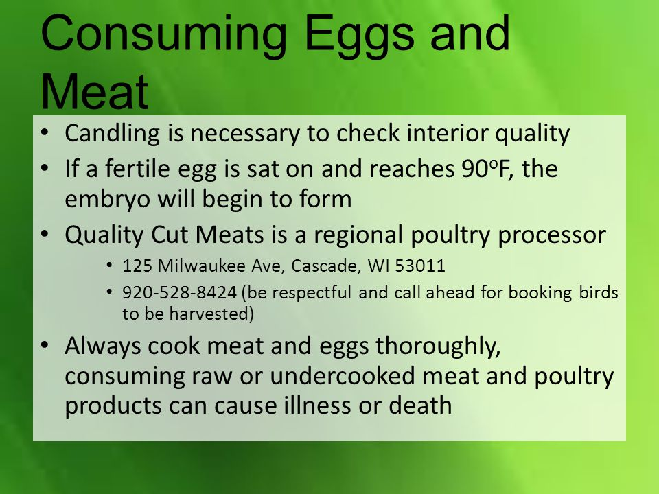 Consuming Eggs and Meat Candling is necessary to check interior quality If a fertile egg is sat on and reaches 90 o F, the embryo will begin to form Q