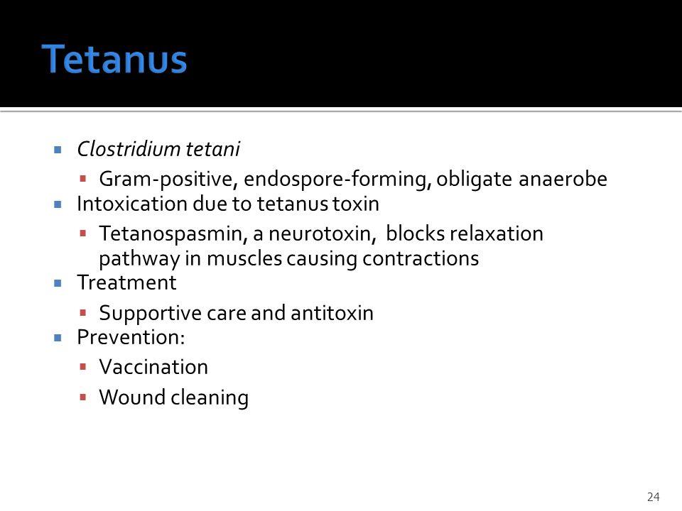  Clostridium tetani  Gram-positive, endospore-forming, obligate anaerobe  Intoxication due to tetanus toxin  Tetanospasmin, a neurotoxin, blocks r