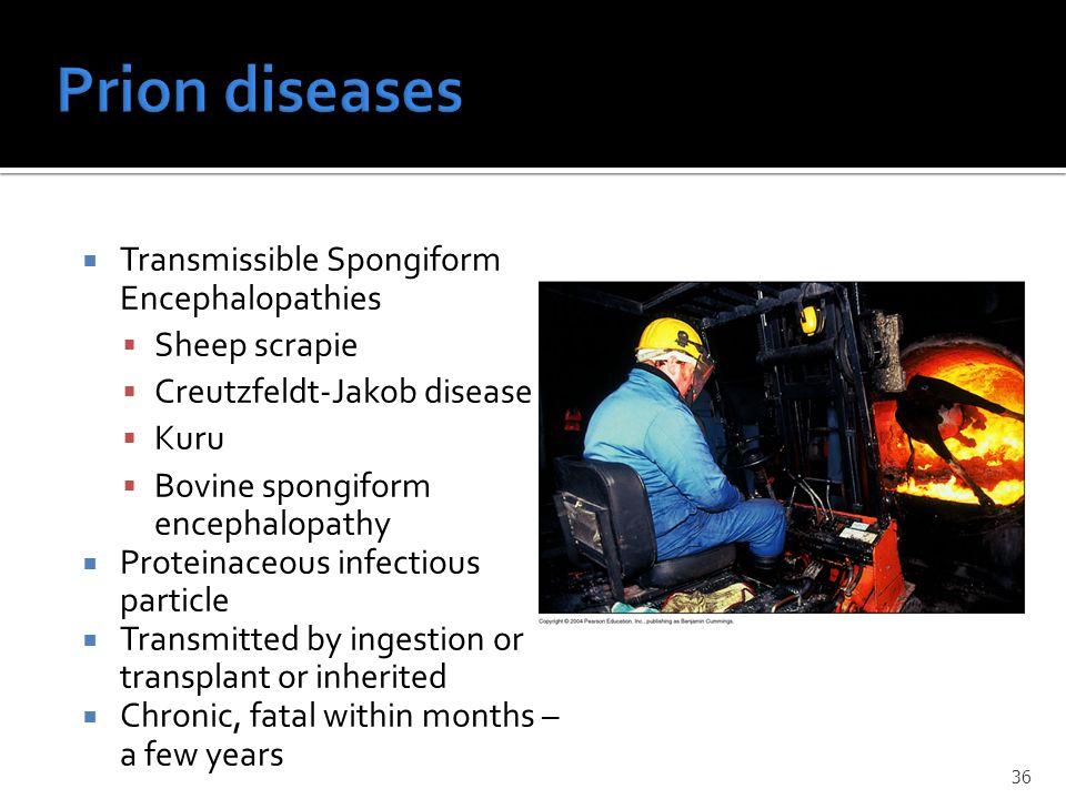  Transmissible Spongiform Encephalopathies  Sheep scrapie  Creutzfeldt-Jakob disease  Kuru  Bovine spongiform encephalopathy  Proteinaceous infe