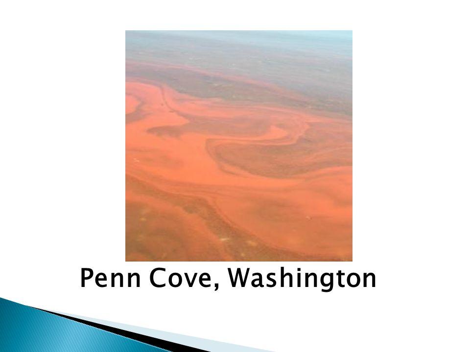 Penn Cove, Washington