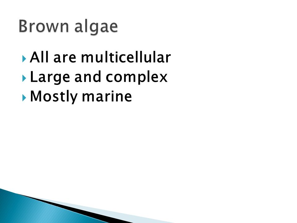  All are multicellular  Large and complex  Mostly marine