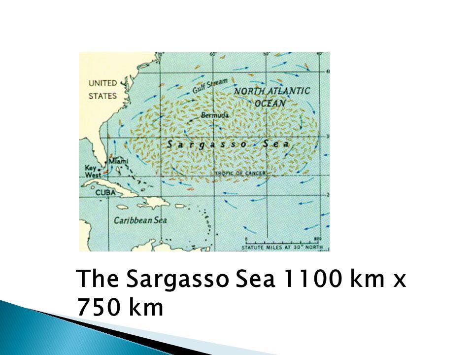 The Sargasso Sea 1100 km x 750 km