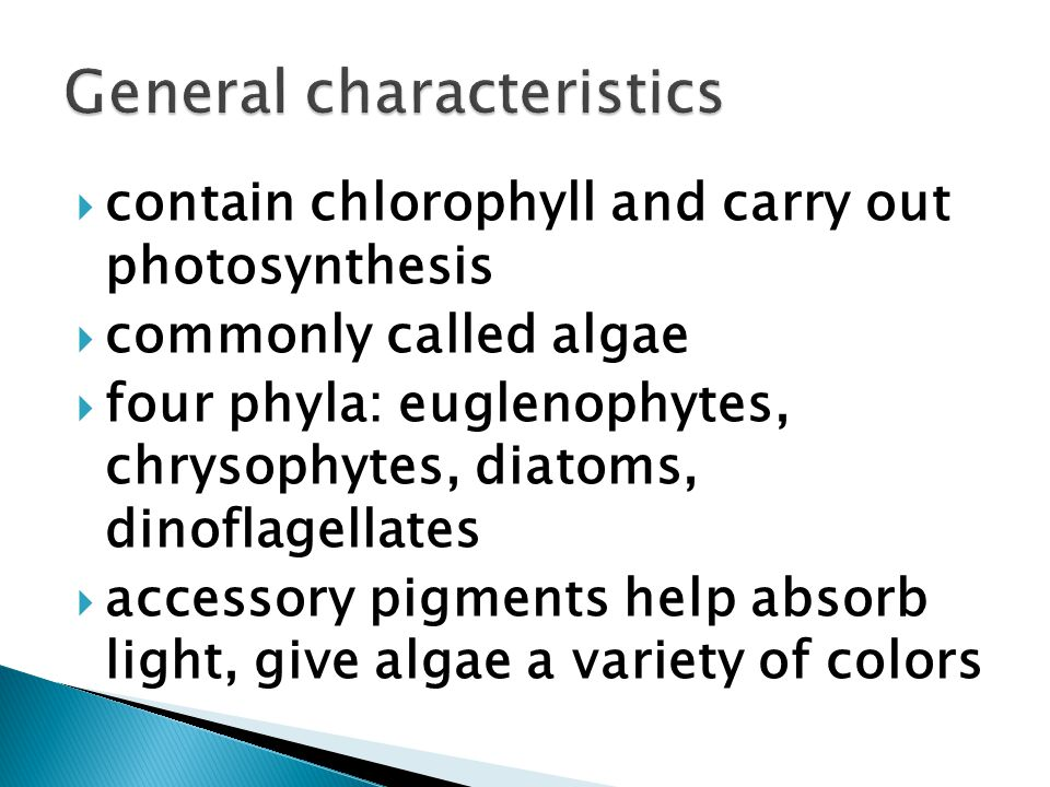  contain chlorophyll and carry out photosynthesis  commonly called algae  four phyla: euglenophytes, chrysophytes, diatoms, dinoflagellates  accessory pigments help absorb light, give algae a variety of colors