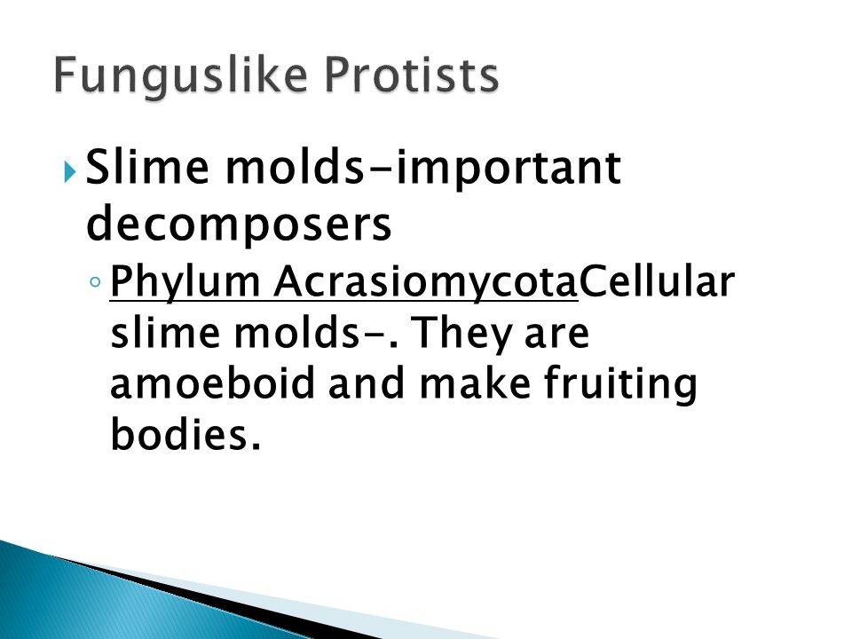  Slime molds-important decomposers ◦ Phylum AcrasiomycotaCellular slime molds-.