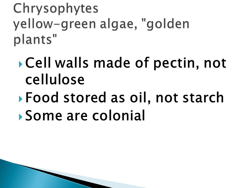  Cell walls made of pectin, not cellulose  Food stored as oil, not starch  Some are colonial