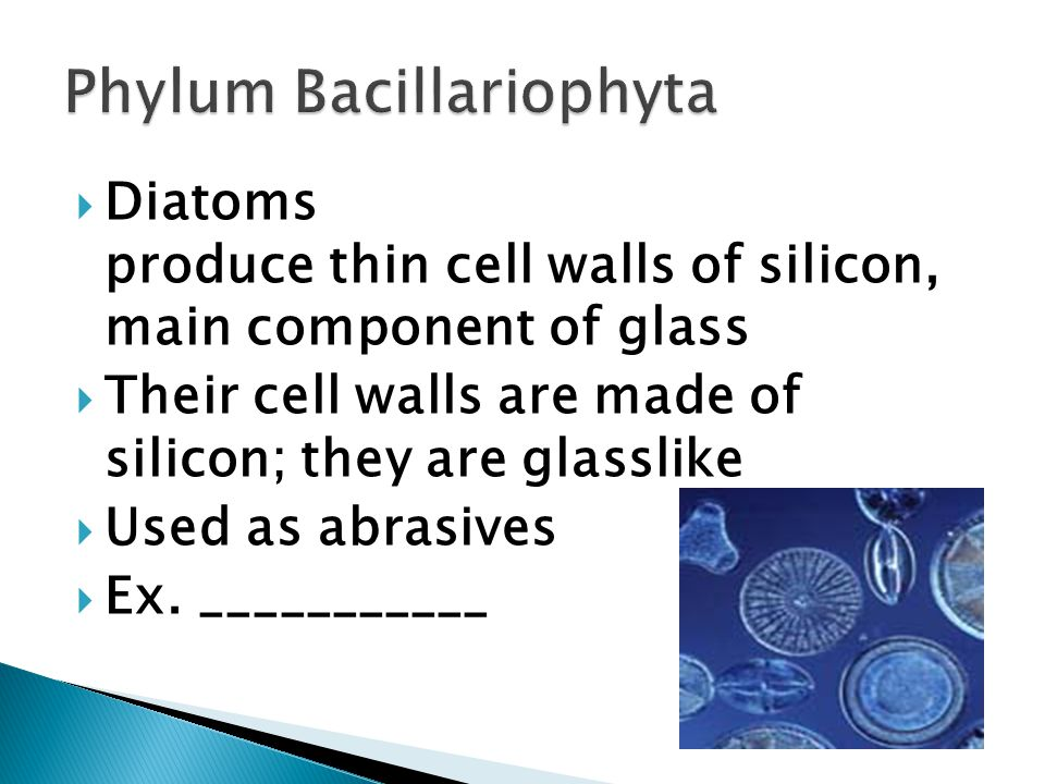  Diatoms produce thin cell walls of silicon, main component of glass  Their cell walls are made of silicon; they are glasslike  Used as abrasives  Ex.