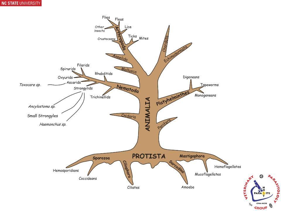 Dewormer Resistance Characteristics of Resistance 1.