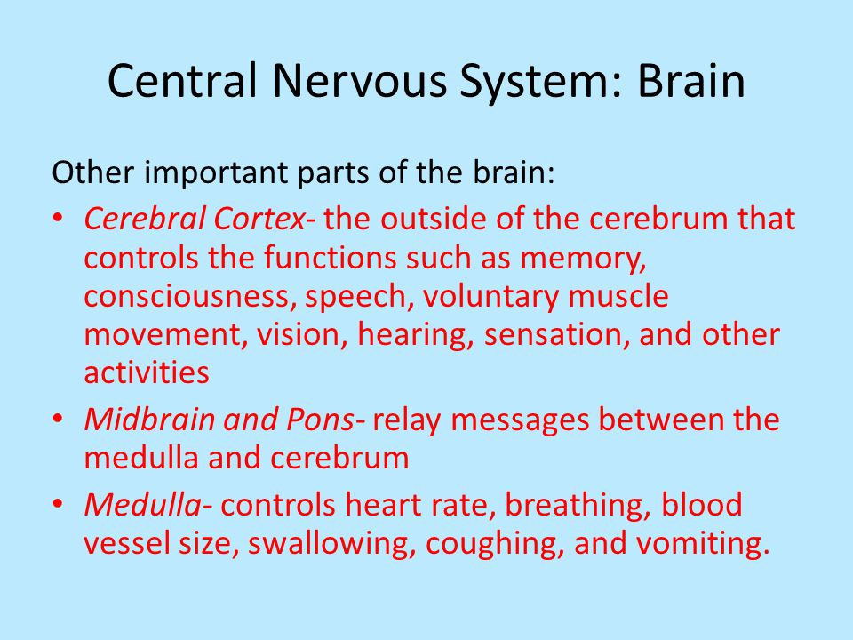 Central Nervous System: Brain Other important parts of the brain: Cerebral Cortex- the outside of the cerebrum that controls the functions such as memory, consciousness, speech, voluntary muscle movement, vision, hearing, sensation, and other activities Midbrain and Pons- relay messages between the medulla and cerebrum Medulla- controls heart rate, breathing, blood vessel size, swallowing, coughing, and vomiting.