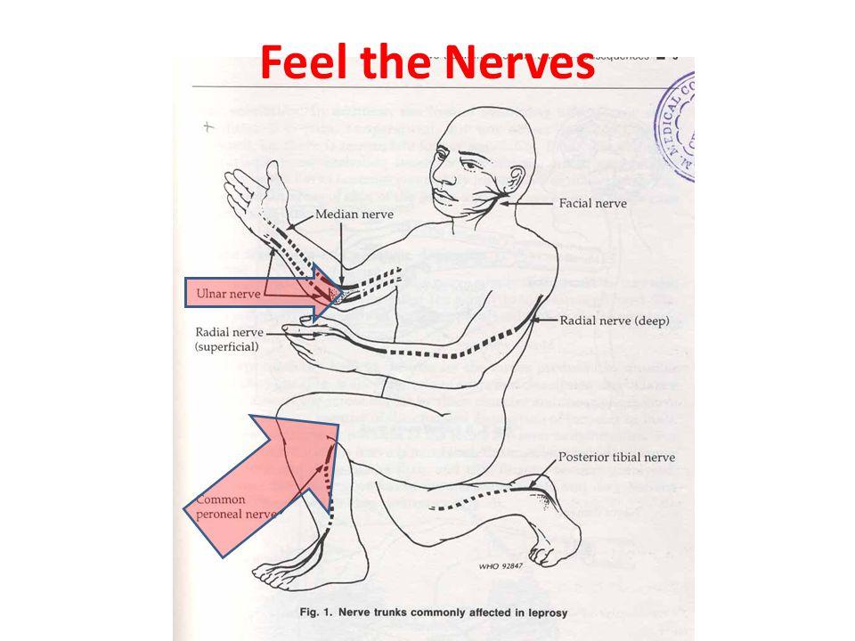 Feel the Nerves
