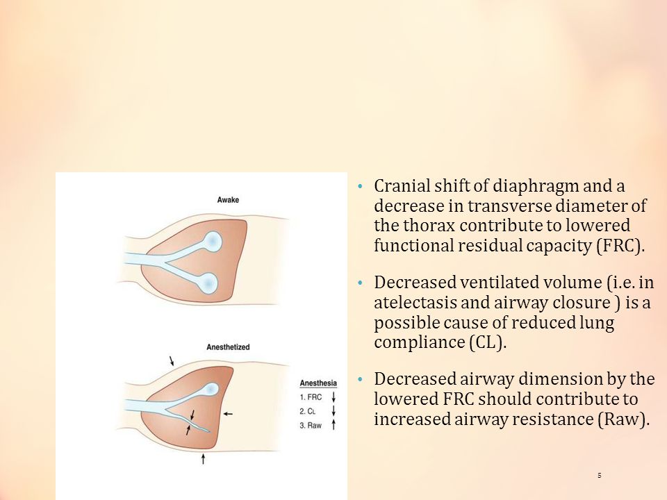 Cranial shift of diaphragm and a decrease in transverse diameter of the thorax contribute to lowered functional residual capacity (FRC). Decreased ven