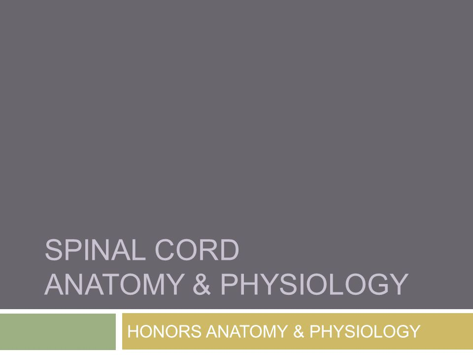 SPINAL CORD ANATOMY & PHYSIOLOGY HONORS ANATOMY & PHYSIOLOGY