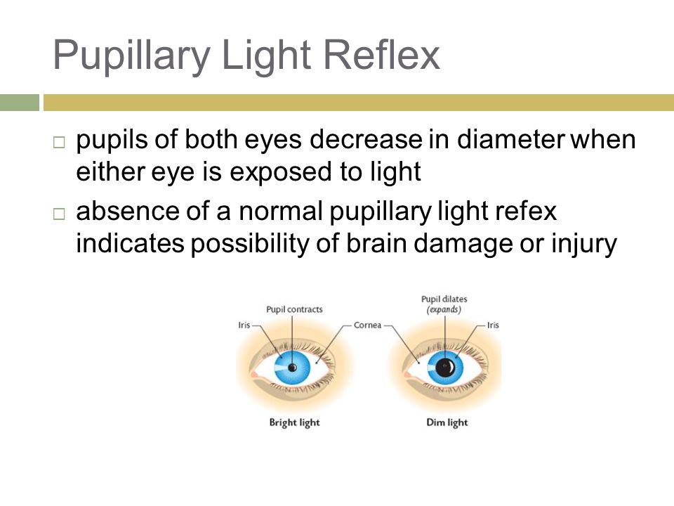 Pupillary Light Reflex  pupils of both eyes decrease in diameter when either eye is exposed to light  absence of a normal pupillary light refex indicates possibility of brain damage or injury