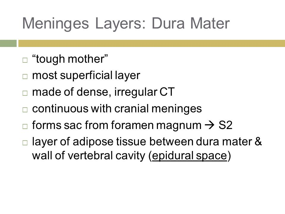 Meninges Layers: Dura Mater  tough mother  most superficial layer  made of dense, irregular CT  continuous with cranial meninges  forms sac from foramen magnum  S2  layer of adipose tissue between dura mater & wall of vertebral cavity (epidural space)