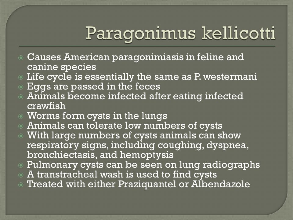 Causes American paragonimiasis in feline and canine species  Life cycle is essentially the same as P.