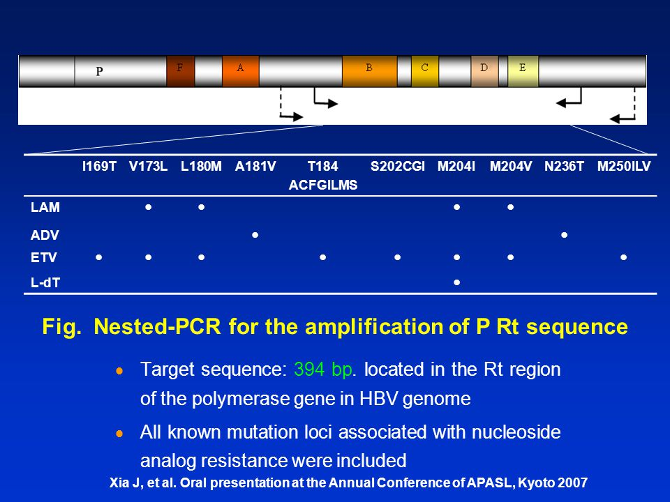  Target sequence: 394 bp. located in the Rt region of the polymerase gene in HBV genome  All known mutation loci associated with nucleoside analog r