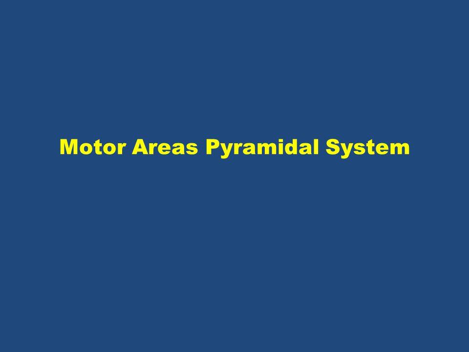 Motor Areas Pyramidal System