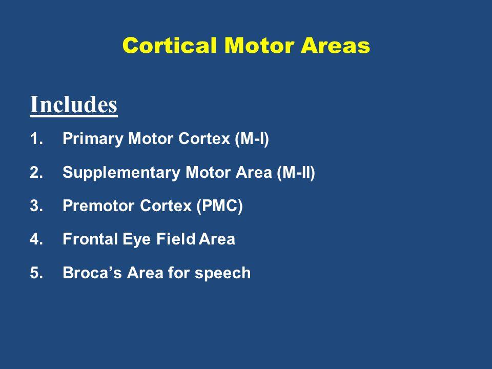 Cortical Motor Areas Includes 1.Primary Motor Cortex (M-I) 2.Supplementary Motor Area (M-II) 3.Premotor Cortex (PMC) 4.Frontal Eye Field Area 5.Broca's Area for speech