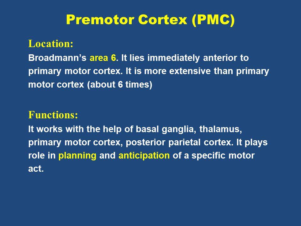 Premotor Cortex (PMC) Location: Broadmann's area 6.