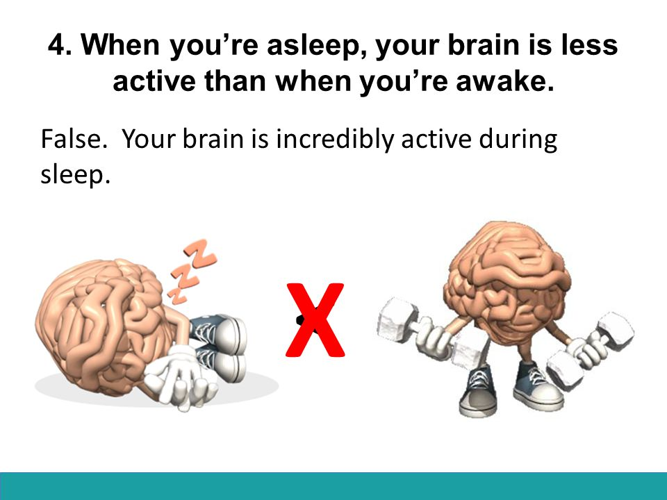 4.When you're asleep, your brain is less active than when you're awake.