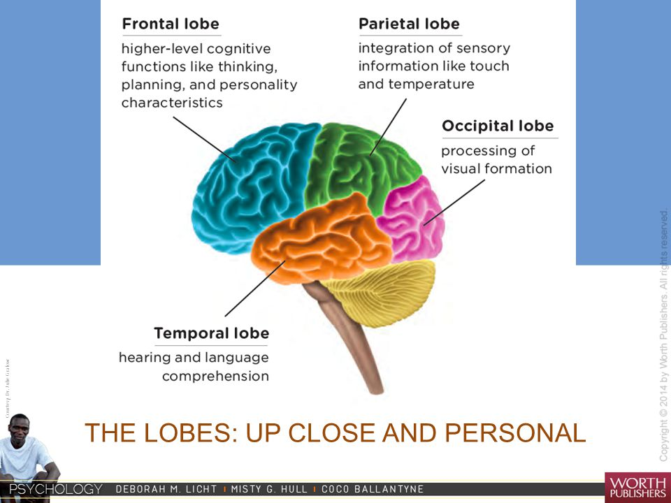 Courtesy Dr. Julie Gralow THE LOBES: UP CLOSE AND PERSONAL