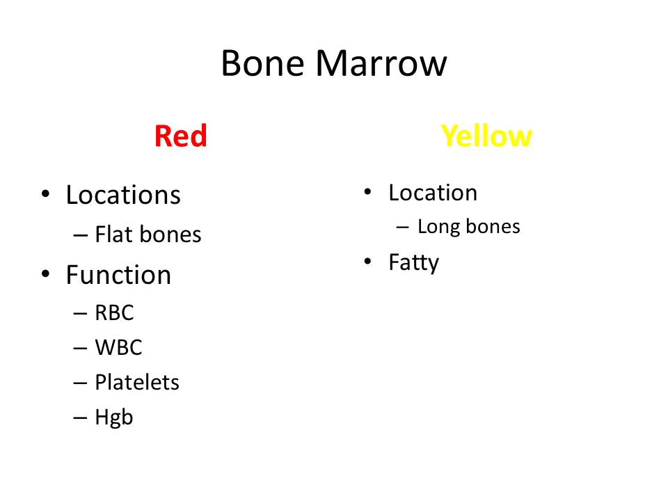 Bone Marrow Red Locations – Flat bones Function – RBC – WBC – Platelets – Hgb Yellow Location – Long bones Fatty
