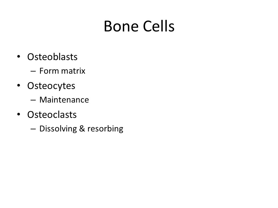 Bone Cells Osteoblasts – Form matrix Osteocytes – Maintenance Osteoclasts – Dissolving & resorbing