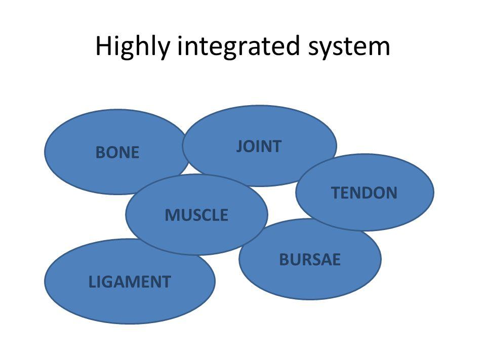 Ligaments, tendons, bursa Ligaments – Bind bone to bone