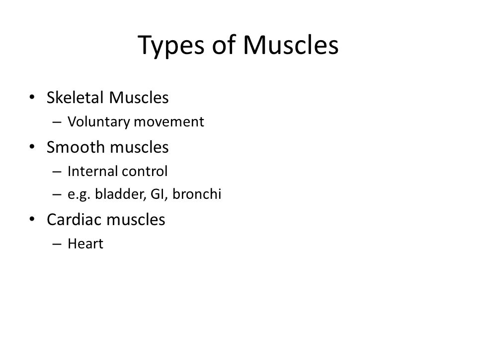 Types of Muscles Skeletal Muscles – Voluntary movement Smooth muscles – Internal control – e.g.