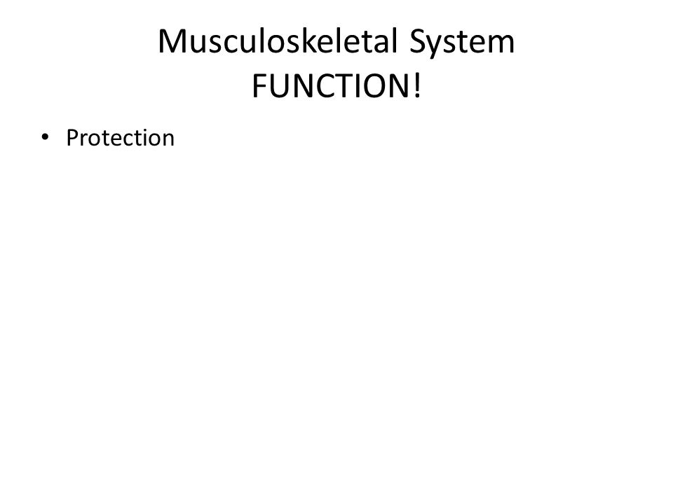 Musculoskeletal System FUNCTION! Protection