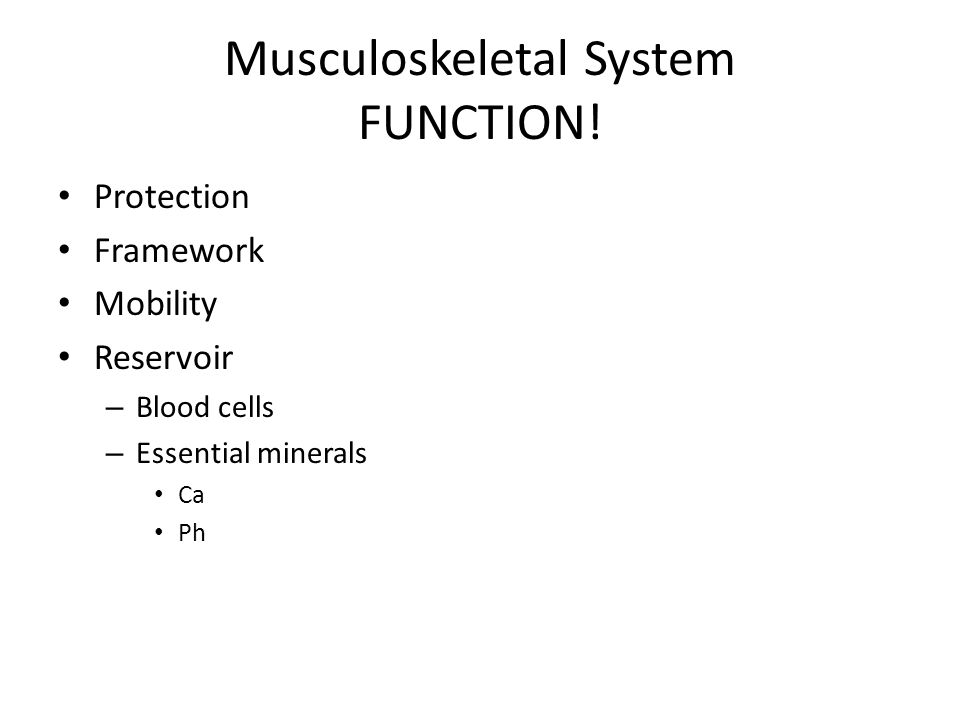 Musculoskeletal System FUNCTION! Protection Framework Mobility Reservoir – Blood cells – Essential minerals Ca Ph