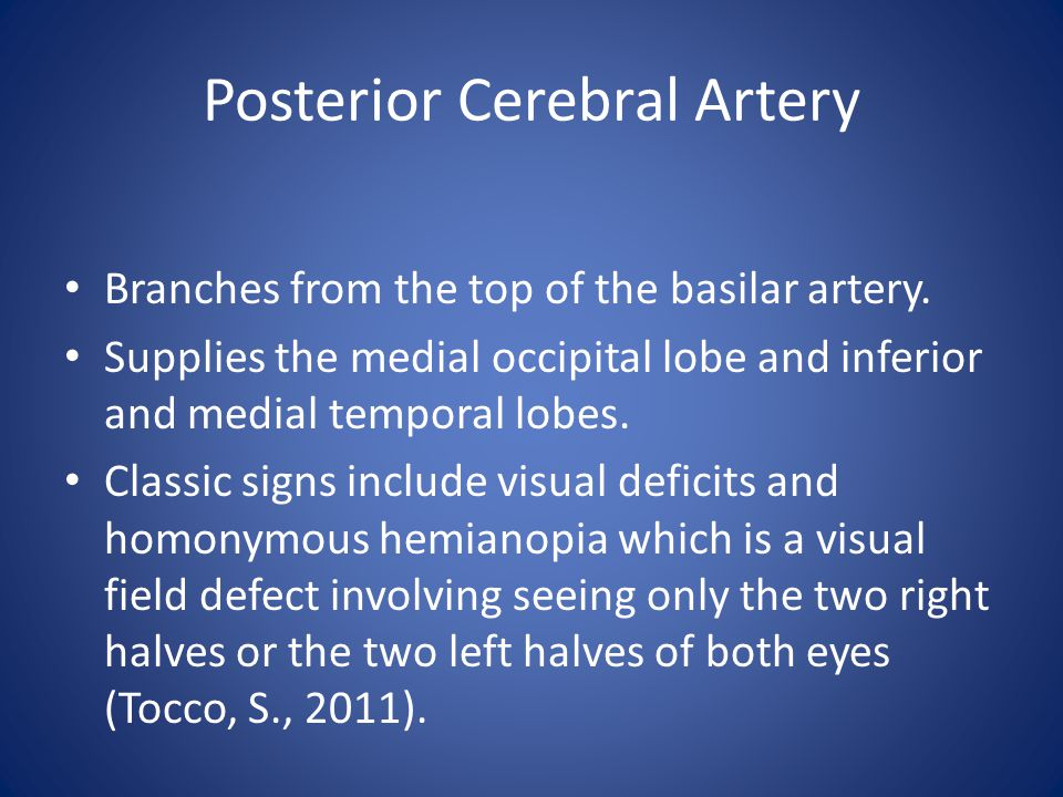 Posterior Cerebral Artery Branches from the top of the basilar artery.