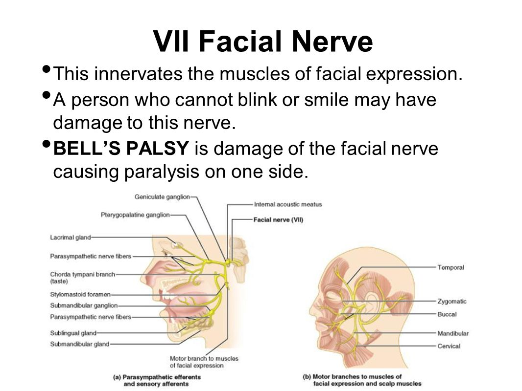 VII Facial Nerve This innervates the muscles of facial expression. A person who cannot blink or smile may have damage to this nerve. BELL'S PALSY is d