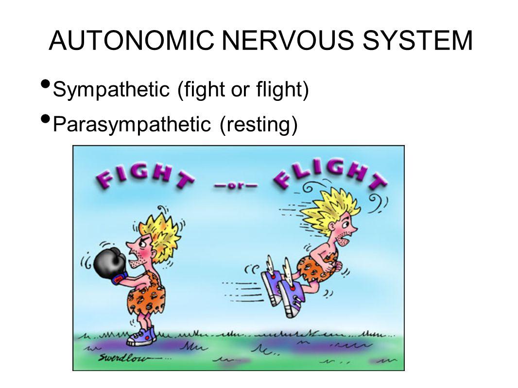 AUTONOMIC NERVOUS SYSTEM Sympathetic (fight or flight) Parasympathetic (resting)