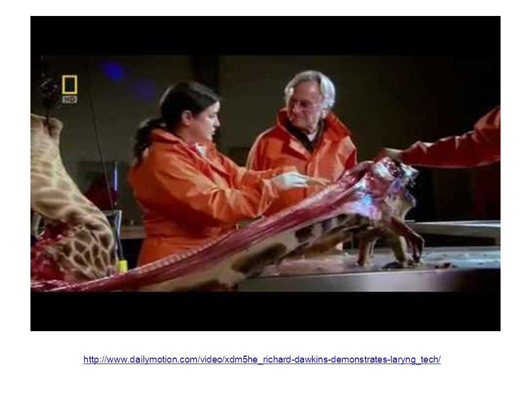 http://www.dailymotion.com/video/xdm5he_richard-dawkins-demonstrates-laryng_tech/