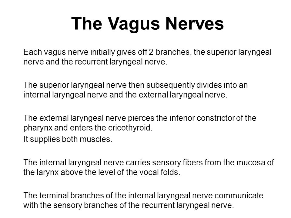 The Vagus Nerves Each vagus nerve initially gives off 2 branches, the superior laryngeal nerve and the recurrent laryngeal nerve.