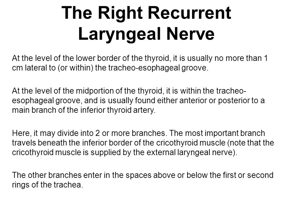 The Right Recurrent Laryngeal Nerve At the level of the lower border of the thyroid, it is usually no more than 1 cm lateral to (or within) the tracheo-esophageal groove.