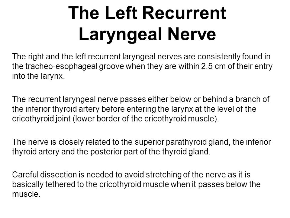 The Left Recurrent Laryngeal Nerve The right and the left recurrent laryngeal nerves are consistently found in the tracheo-esophageal groove when they are within 2.5 cm of their entry into the larynx.