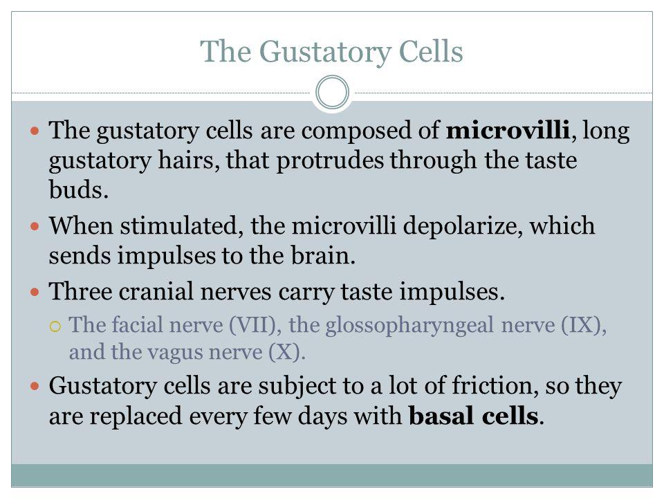Anatomy of the Taste Buds