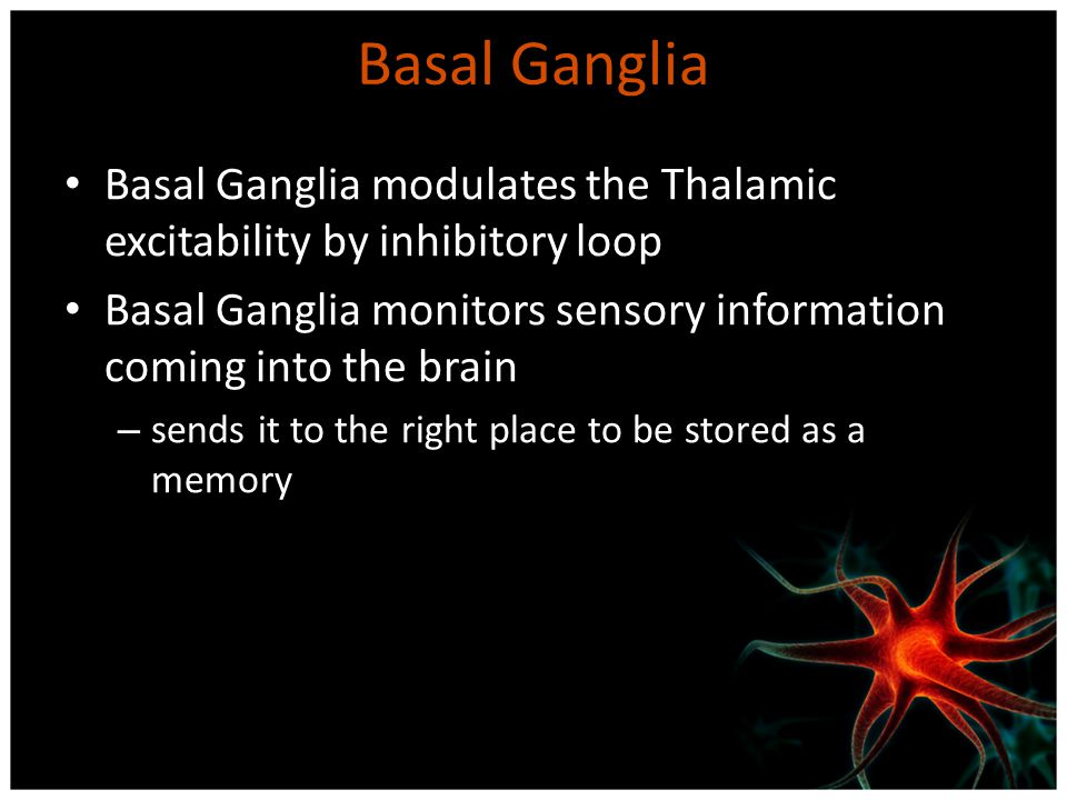 Basal Ganglia Basal Ganglia modulates the Thalamic excitability by inhibitory loop Basal Ganglia monitors sensory information coming into the brain –