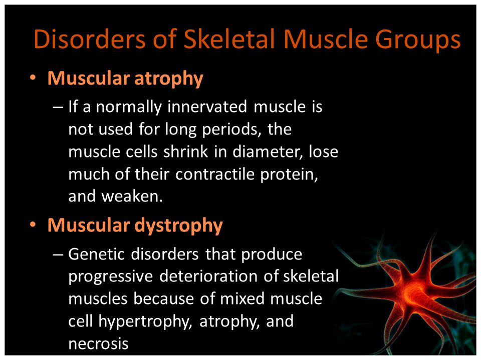 Disorders of Skeletal Muscle Groups Muscular atrophy – If a normally innervated muscle is not used for long periods, the muscle cells shrink in diamet